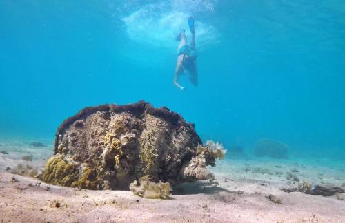 Giant clams at Makogai